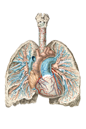 Respiratory Treatment | Breathing Treatment | New Port Richey FL | Spring Hill FL | Trinity FL